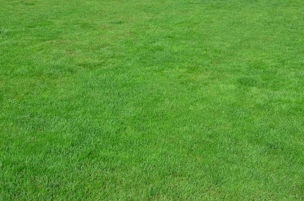 Sito con erba verde uniformemente tagliata. Foto Premium