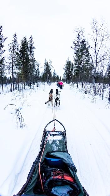 Slitta trainata da cani con husky nel bellissimo paesaggio Foto Premium