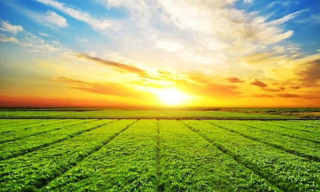 Soleggiato paesaggio prato Foto Gratuite