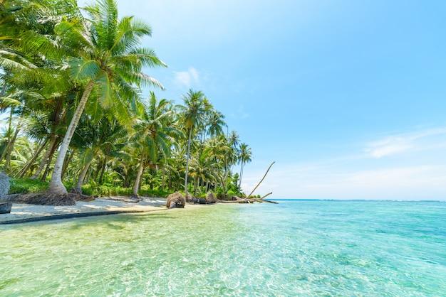 Spiaggia di sabbia bianca con acqua blu turchese del cocco degli alberi tropicali Foto Premium