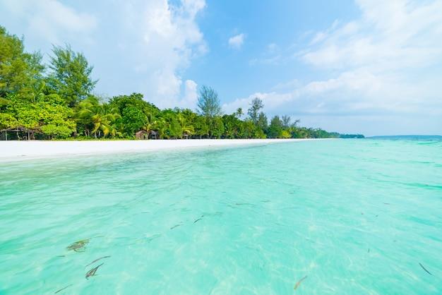 Spiaggia di sabbia bianca con palme da cocco acqua turchese trasparente, destinazione di viaggio tropicale, spiaggia deserta nessun popolo - isole kei, molucche, indonesia Foto Premium