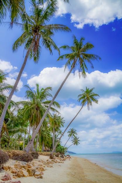 Spiaggia tropicale con alberi di cocco che si protende nel mare, koh samui, thailandia Foto Premium