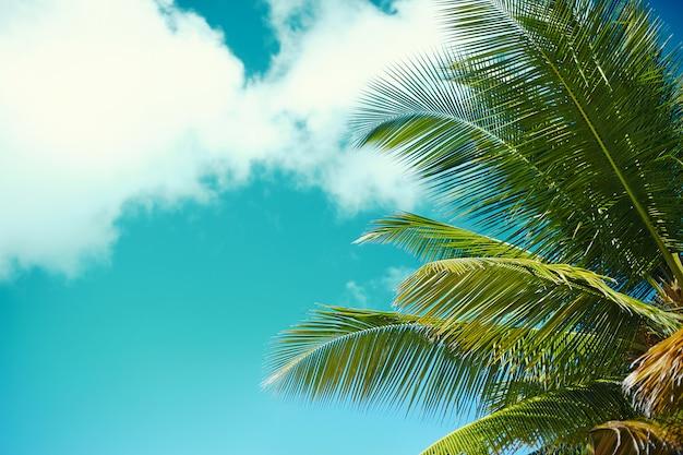 Spiaggia tropicale di estate con il fondo del mare e del cielo del ramo di albero di foglia di palma Foto Gratuite