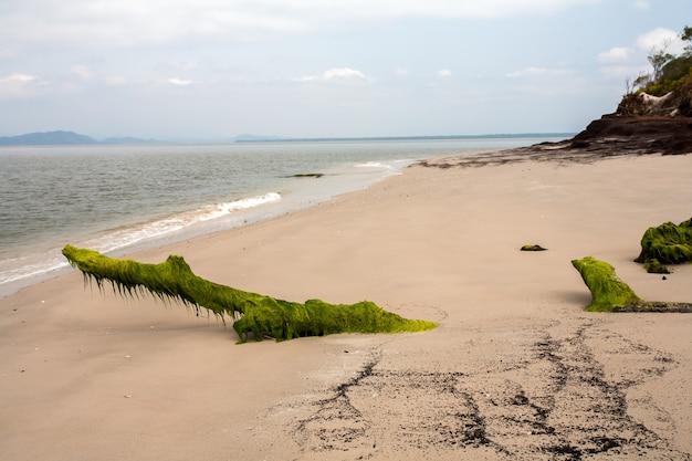 Spiaggia vuota con tronchi coperti di alghe nella sabbia Foto Premium