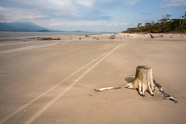 Spiaggia vuota con tronchi nei segni di sabbia e weel Foto Premium