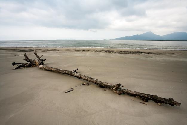 Spiaggia vuota con tronchi nella sabbia Foto Premium