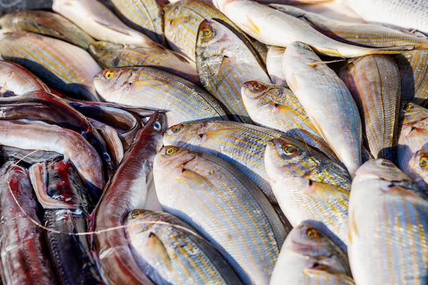 Splendidamente steso sul bancone è un pesce appena pescato. Foto Premium