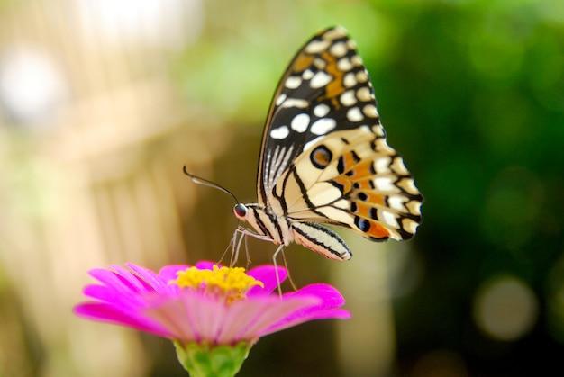 Splendide farfalle succhiano il miele dei fiori Foto Premium