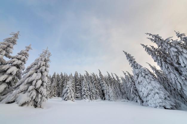 Splendido paesaggio montano invernale. abeti alti coperti di neve nella foresta di inverno e cielo nuvoloso. Foto Premium