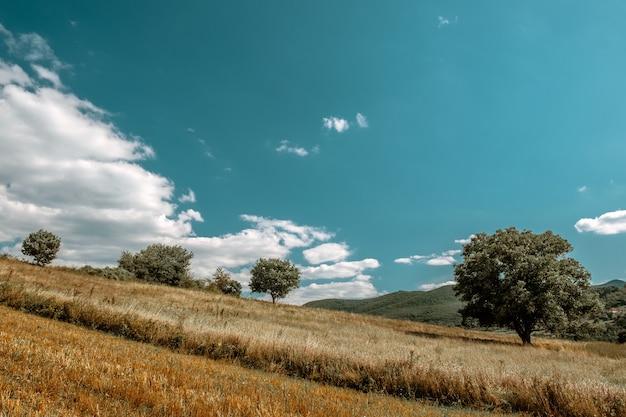 Splendido scenario di un campo pieno di diversi tipi di piante in campagna Foto Gratuite
