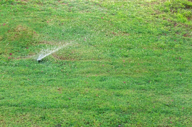 Sprinkler in giardino innaffiare il prato. concetto di prati d'innaffiamento automatico Foto Premium