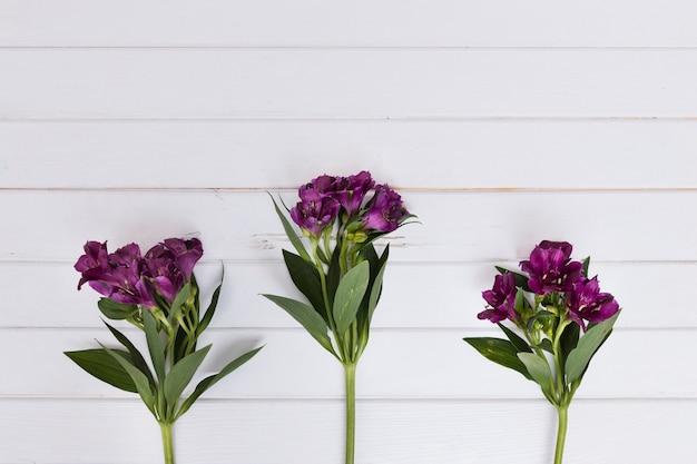 Fiori Composti.Steli Composti Con Fiori Viola Foto Gratis