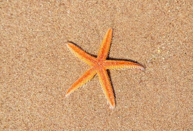 Stelle marine sulla spiaggia di sabbia Foto Premium