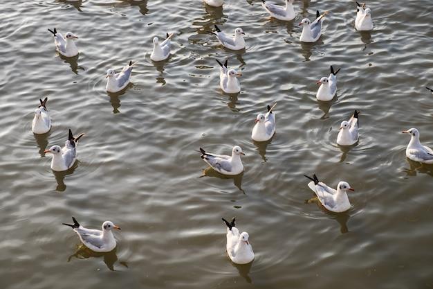 Stormo di gabbiani galleggianti sul mare Foto Premium
