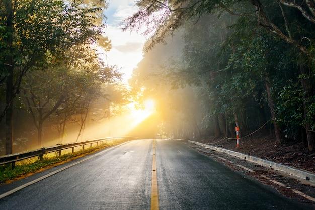Strada attraverso la foresta autunnale in una mattina nebbiosa con raggi di sole Foto Premium