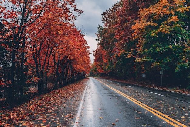 Strada circondata da alberi con foglie colorate durante la caduta Foto Gratuite