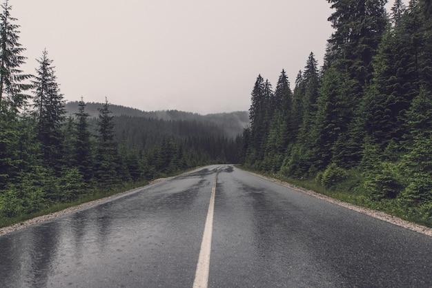 Strada vuota sul paesaggio forestale Foto Gratuite