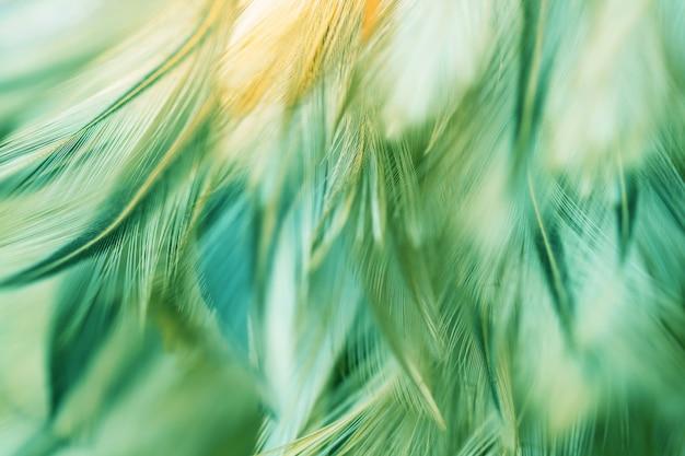 Struttura della piuma dei polli dell'uccello della sfuocatura per fondo, fantasia, colore astratto e morbido di progettazione di arte. Foto Premium