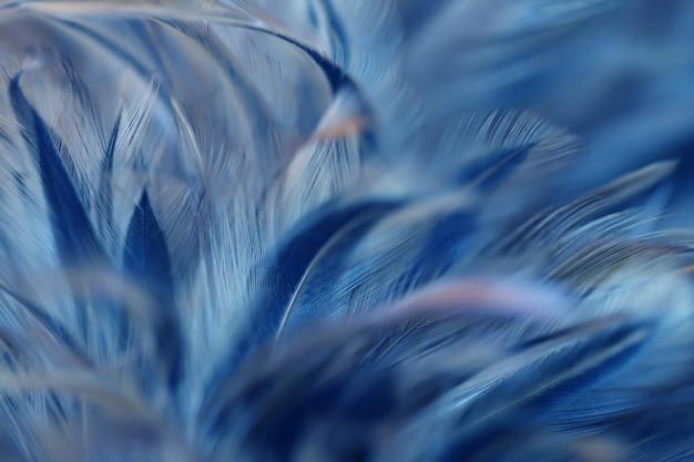 Struttura della piuma dei polli dell'uccello della sfuocatura per fondo Foto Premium