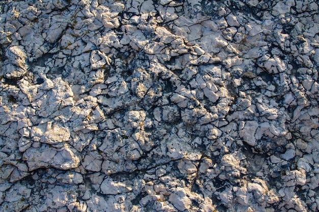 Struttura della roccia sulla costa di kamenjak in istria, croazia Foto Gratuite