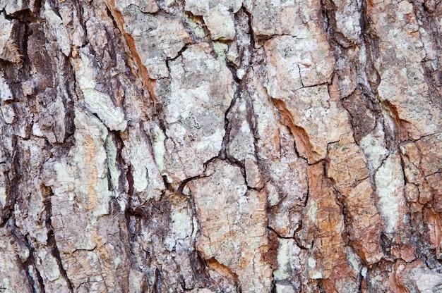 Struttura di legno - particolare del tronco di un albero Foto Premium