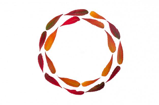 Struttura rotonda delle foglie di autunno luminose isolate su bianco Foto Premium