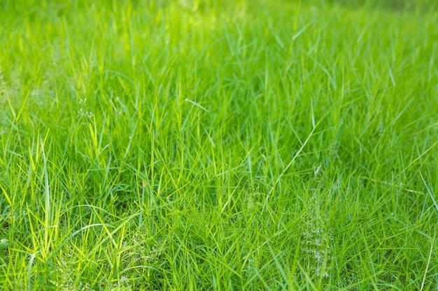Sullo sfondo di prato con erba verde scaricare foto gratis for Prato verde