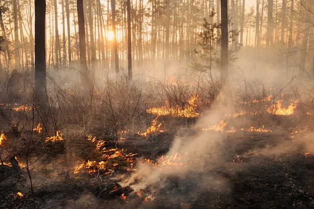 Sviluppo di incendi boschivi su sfondo tramonto Foto Premium