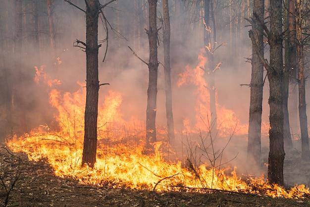 Sviluppo di incendi boschivi Foto Premium