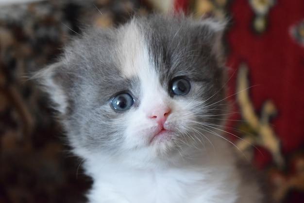Tagli il gattino del bambino Foto Premium