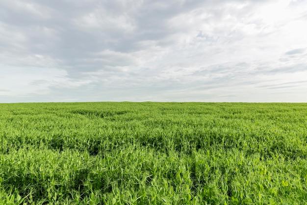 Terreno agricolo in campagna Foto Gratuite