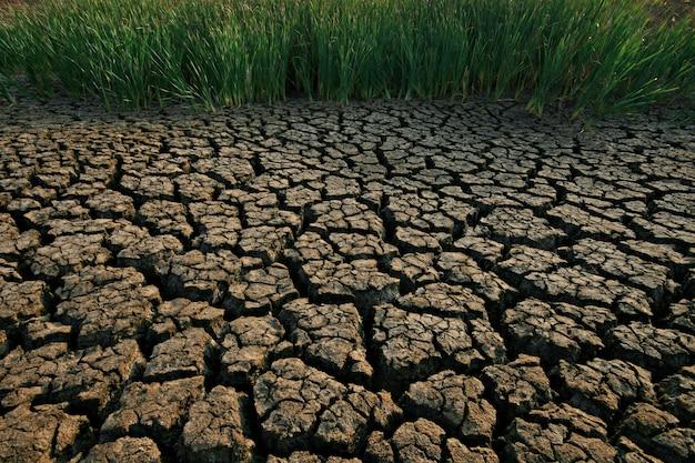 Terreno con terreno secco e incrinato Foto Premium