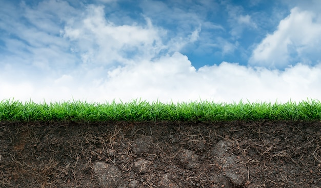 Terreno ed erba in cielo blu Foto Premium