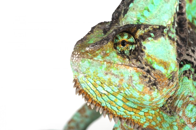 Testa di camaleonte da vicino Foto Gratuite