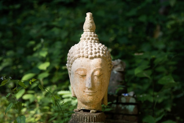 Teste di buddha su sfondo verde Foto Premium