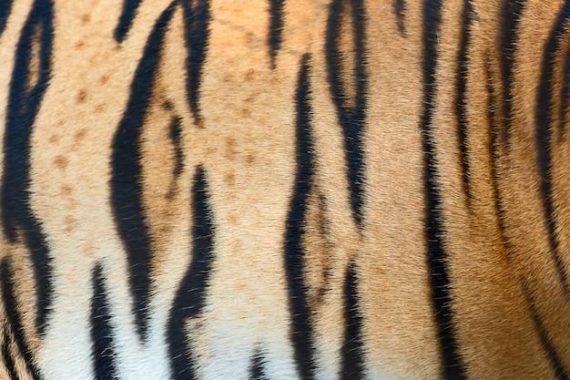 Texture della pelle di tigre. Foto Premium
