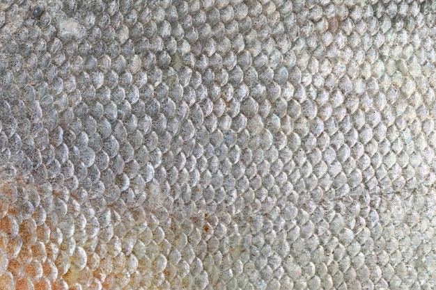 Texture di pesce pacu. Foto Premium
