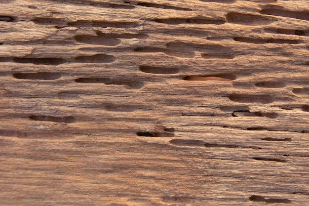 Texture di tracce di termiti mangiano legno Foto Premium