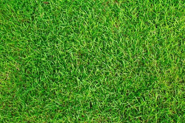 Texture erba di campo Foto Gratuite