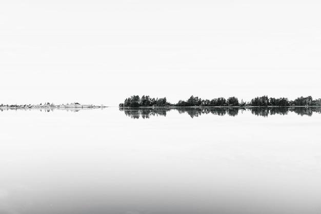 Tiro in scala di grigi di una serie di alberi che si riflettono nell'acqua Foto Gratuite