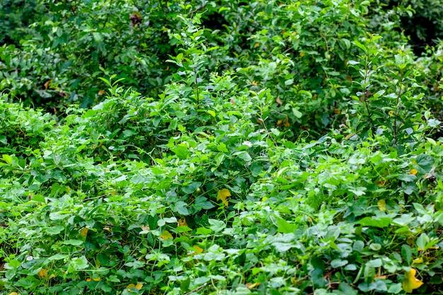 Tono verde foglia in natura Foto Premium