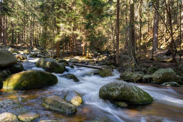 Torrente montano roccioso e alberi di gomma Foto Premium
