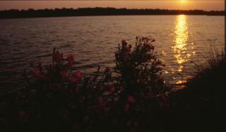 tramonto, natura, piante Foto Gratuite