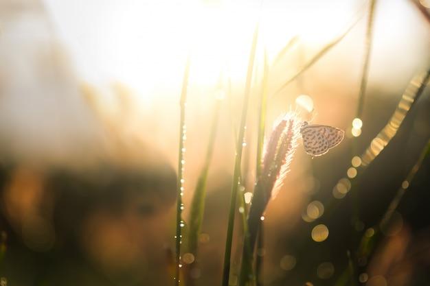 Tramonto alba prato sera bellezza naturale Foto Gratuite