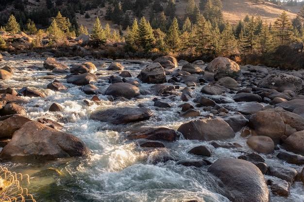 Tramonto che splende sulla foresta di pini con cascata che scorre nel parco nazionale Foto Premium
