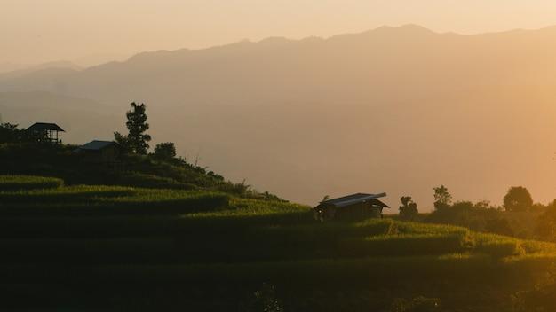 Tramonto dei campi terrazzati in chiangmai Foto Premium