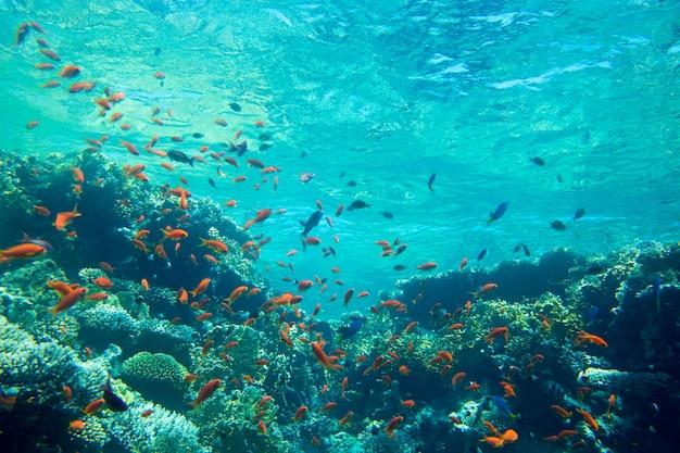 Tranquilla scena subacquea con spazio di copia Foto Premium