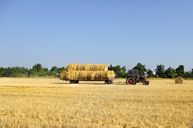 Trattore che trasporta rotoli di balle di fieno - impilandoli sul mucchio. balle di raccolta di macchine agricole di fieno su un campo Foto Premium