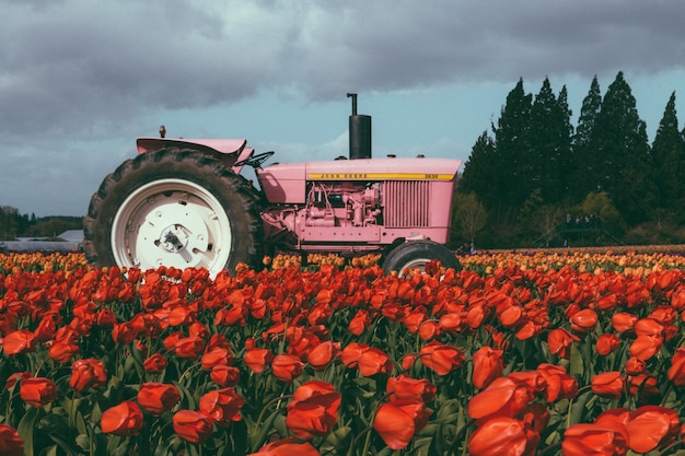 Trattore rosa in un campo pieno di bei tulipani colorati Foto Gratuite