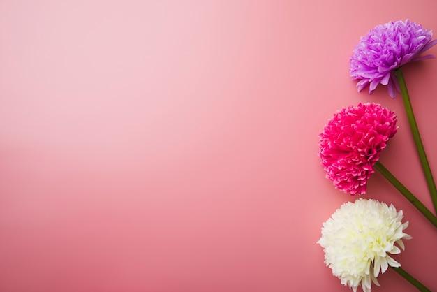 Tre Bellissimi Fiori Colorati Su Sfondo Rosa Scaricare Foto Gratis